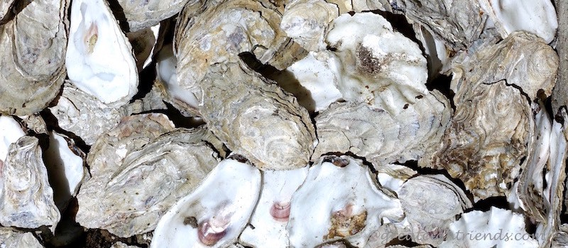Edison Oyster Shells